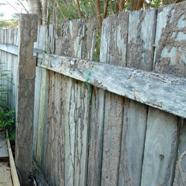 Termite Fence Plasterers