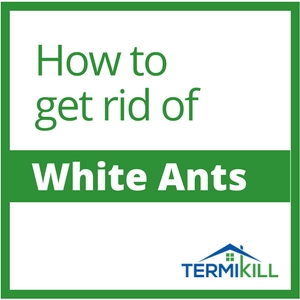 How To Get Rid Of White Ants