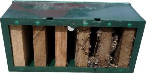 Termite Trap Eaten Underside