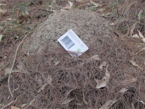 Termite Treatment -In Mound Builder