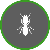 kill-termites