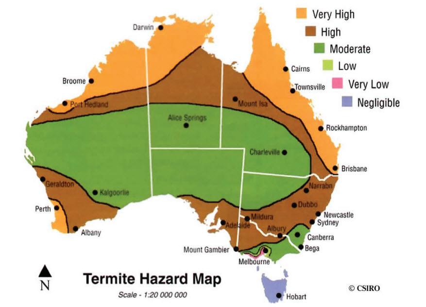 about-termites-heatmap-termite-trap