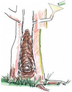 about-termites-hollow-stump-termite-trap