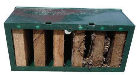 about-termites-trapbase-termite-trap