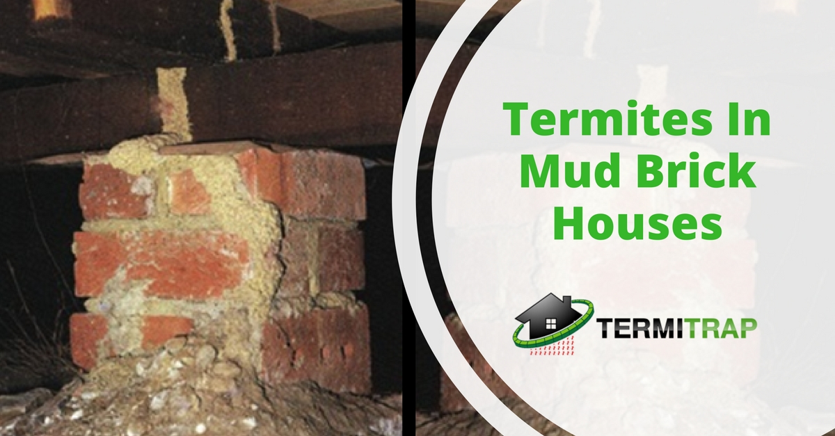Termites in Paper and Styrene Foam