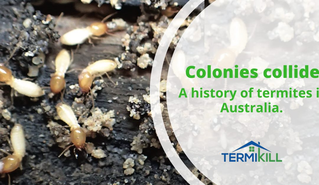 Colonies collide. A history of termites in Australia
