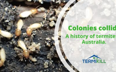 How important are termites in Australia anyway?