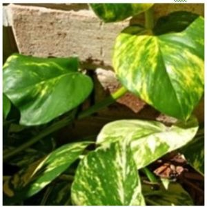 Group of green and yellow leaves on a brown bricks and with the weephole, where Termikill can help in reducing termite.