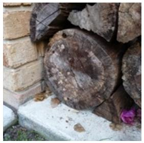 Pile of logs that are placed beside a brick wall that has been attacked by termites which Termikill can help in reducing termite.