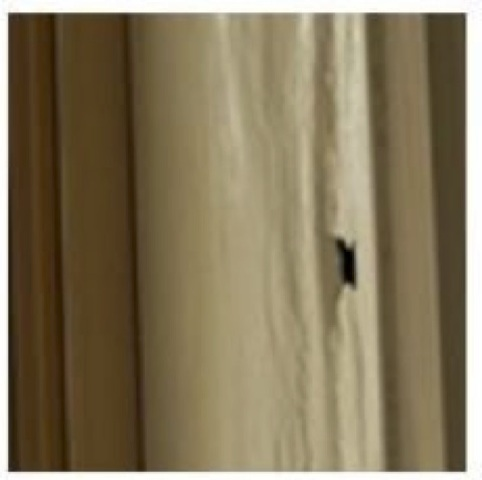 Termite-Research-Making-a-hole-in-affected-timber-1