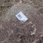 A mound which is a location of termites and white ants, along with a termite trap placed on top.