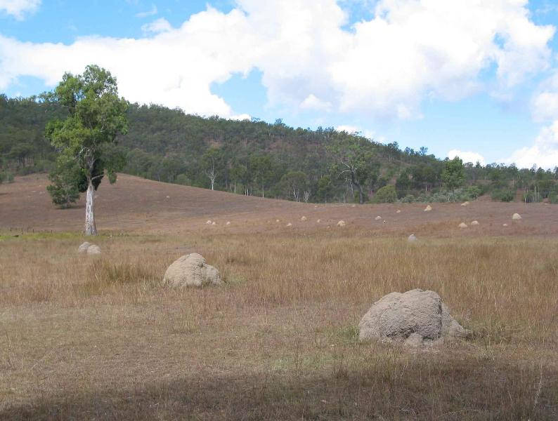 "Wide view of a hillside with trees and mounds, that identifies the termite's location, from the blog ""termite pictures""."