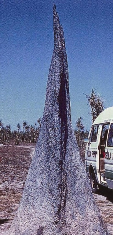 "Tall narrow mound which is a location of termites, from the blog ""termite pictures""."