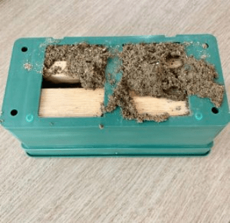 A green plastic box of a termite trap with a termite's mud all over.
