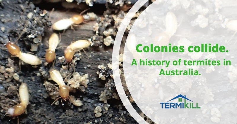 "Colonies collide, history of termites in Australia that represents the ""termite in australia"" blog."