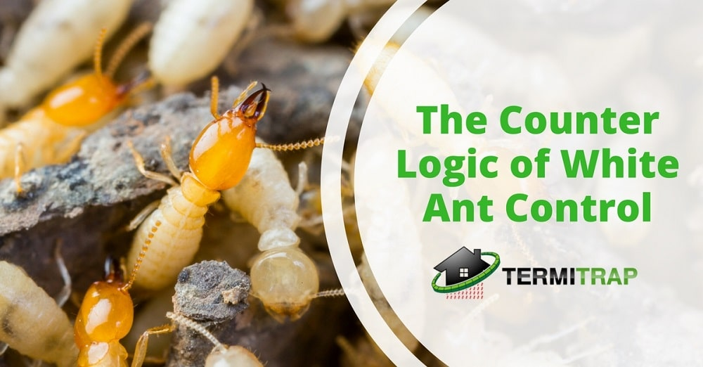 "Image header that says ""The Counter Logic of White Ant Control"" that represents the ""the counter logic of white ant control"" blog."