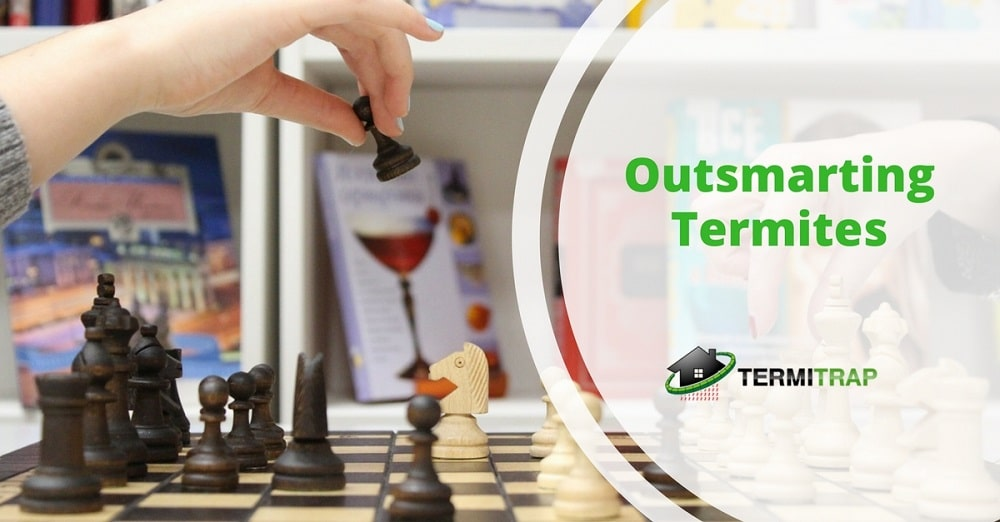 "Image header that says ""Outsmarting Termites"", with a background of hand holding a chess-piece."