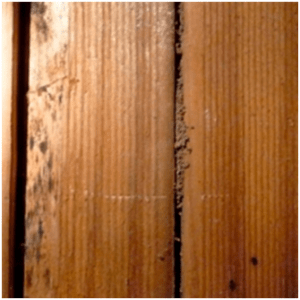 Panel damage that represents termites and white ants home inspection.