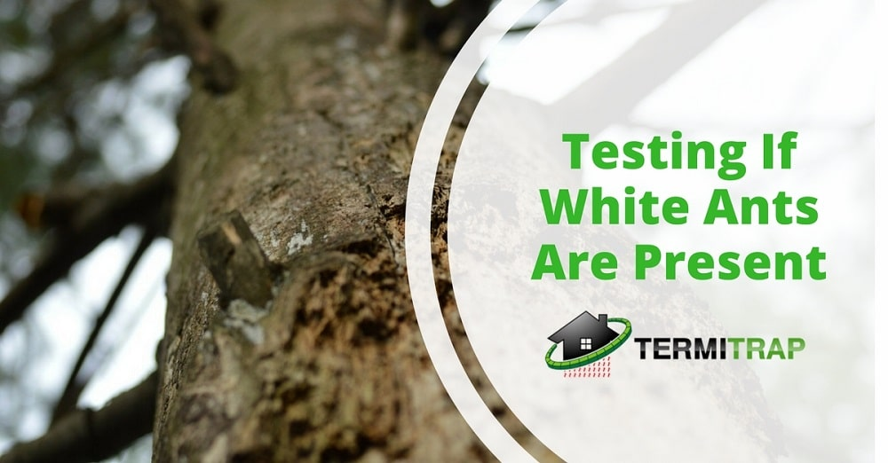 """Image header that says """"Testing If White Ants Are Present"""" that represents the """"white ants presence inspection"""" blog."""