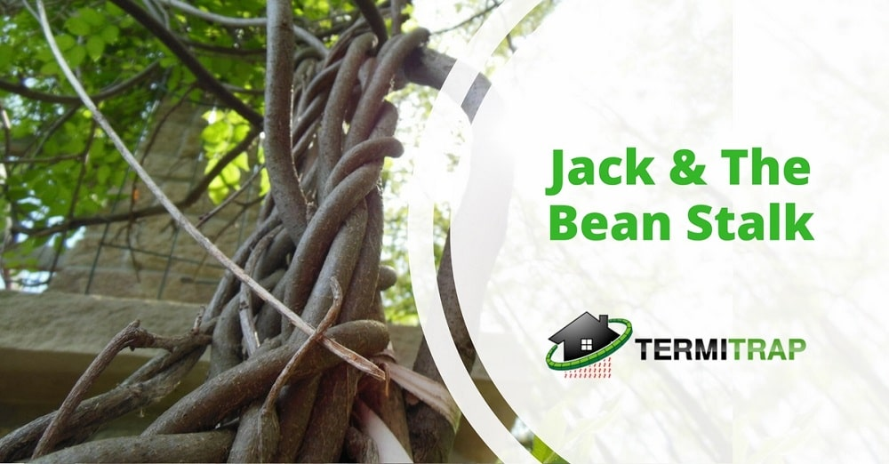 """Image header that says """"Jack & The Bean Stalk"""" that represents the """"about termites"""" blog."""