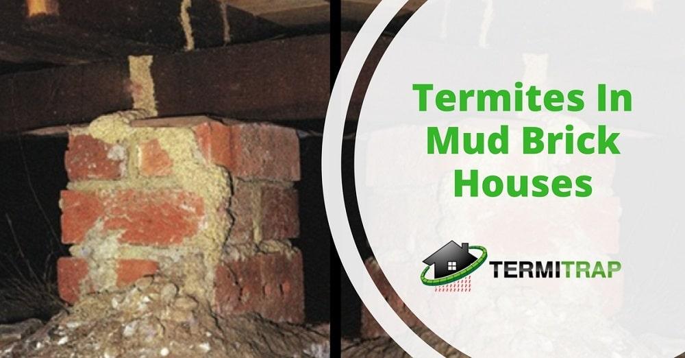 "Image header that says ""Termites In Mud Brick Houses"" that represents the ""termites in mudbrick houses"" blog."