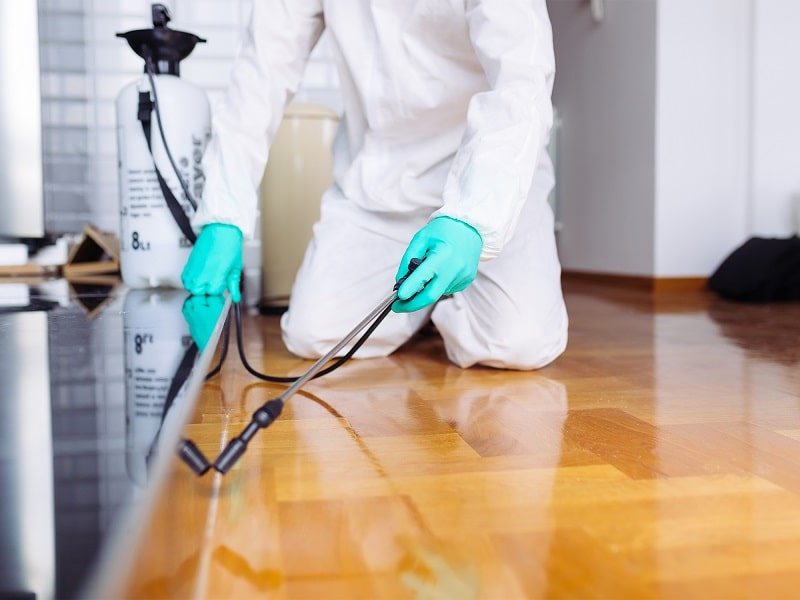 """A Pests/Termites professional doing home inspection and that represents the """"how does termite bait work blog."""