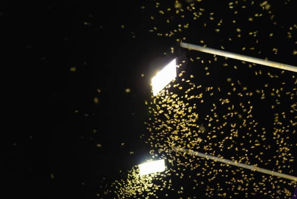"Flying termite colonies on a street light and that represents the ""termites swarms in the fire"" blog."